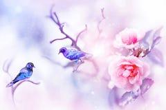 Pequeños pájaros coloridos fantásticos y rosas rosadas hermosas en la nieve y helada en un fondo azul y rosado snowing fotografía de archivo
