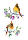 Pequeños pájaros de la acuarela Fotografía de archivo libre de regalías