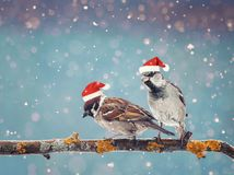 Pequeños pájaros divertidos que asisten en una rama en invierno en la nieve Imagen de archivo