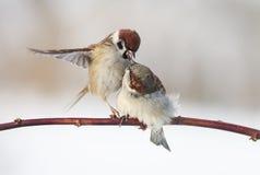 pequeños pájaros divertidos que se sientan en una rama en el parque Fotos de archivo libres de regalías