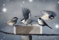 Pequeños pájaros en invierno Fotos de archivo