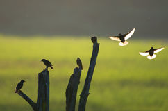 Pequeños pájaros y un viejo gancho de madera Foto de archivo libre de regalías