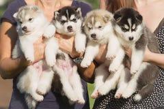 Pequeños perritos Imagen de archivo