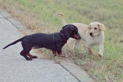 Pequeños perritos hermosos Imagen de archivo