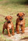 Pequeños perritos lindos fotos de archivo