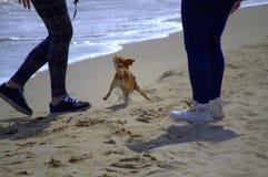 Pequeños perro y muchachas en la playa Imagen de archivo