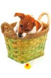 Pequeños perro y pato Fotos de archivo