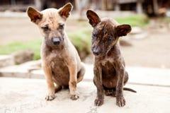 Pequeños perros perdidos Fotos de archivo libres de regalías