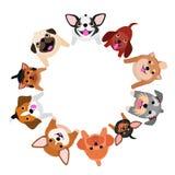 Pequeños perros que se sientan que miran para arriba en círculo Imagenes de archivo
