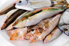 Pequeños pescados fotografía de archivo libre de regalías