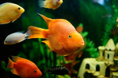 Pequeños pescados Imágenes de archivo libres de regalías