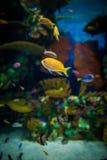 Pequeños pescados en acuario; Imagenes de archivo