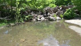 Pequeños pescados en el río de la cascada de los maries, Thassos Grecia almacen de video