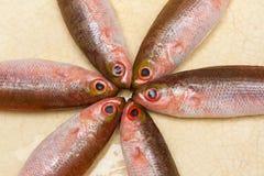 Pequeños pescados en una placa Foto de archivo libre de regalías