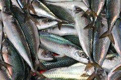 Pequeños pescados frescos foto de archivo