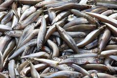 Pequeños pescados frescos imagenes de archivo