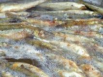 Pequeños pescados fritos del eperlano foto de archivo
