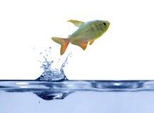 Pequeños pescados sobre el agua azul Fotos de archivo