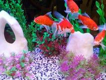 Pequeños pescados y corales coloridos Imagenes de archivo
