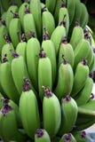 Pequeños plátanos Imágenes de archivo libres de regalías
