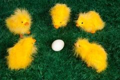 Pequeños polluelos amarillos lindos de Pascua Fotografía de archivo libre de regalías