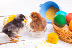 Pequeños polluelos con los huevos de Pascua Imagenes de archivo