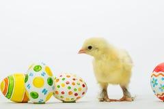 Pequeños polluelos y huevos de Pascua Fotos de archivo libres de regalías