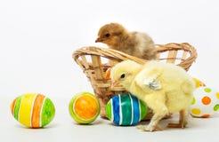 Pequeños polluelos y huevos de Pascua Fotografía de archivo