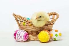 Pequeños polluelos y huevos de Pascua Imagen de archivo libre de regalías