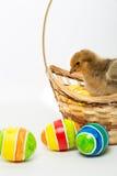 Pequeños polluelos y huevos de Pascua Fotografía de archivo libre de regalías