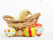 Pequeños polluelos y huevos de Pascua Imagenes de archivo