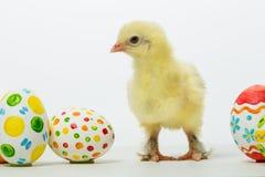 Pequeños polluelos y huevos de Pascua Fotos de archivo