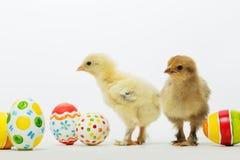 Pequeños polluelos y huevos de Pascua Foto de archivo libre de regalías