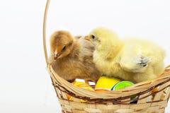 Pequeños polluelos y huevos de Pascua Imagen de archivo