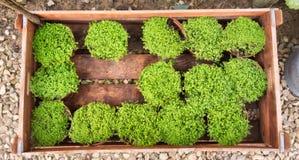 Pequeños potes de la planta en una caja Fotografía de archivo