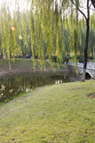 Pequeños puentes y árboles verdes Imagen de archivo libre de regalías