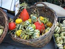 Pequeños pympkins verdes decorativos en cesta foto de archivo
