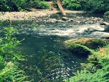 Pequeños rápidos en un río Fotos de archivo