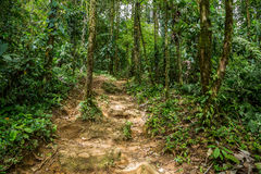 Pequeños rastros en la selva densa verde Imagen de archivo