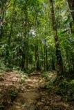 Pequeños rastros en la selva densa verde Fotografía de archivo libre de regalías
