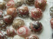 Pequeños Seashells imágenes de archivo libres de regalías
