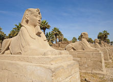 Pequeños spinxes en el templo de Luxor Foto de archivo libre de regalías