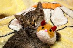 Pequeños sueños lindos del gatito que abrazan el juguete de la felpa Imagen de archivo