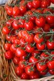 Pequeños tomates Imágenes de archivo libres de regalías