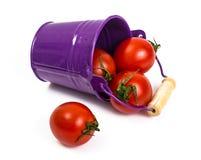 Pequeños tomates rojos Fotos de archivo libres de regalías