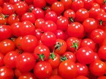 Pequeños tomates rojos en fondo del uniforme del bulto imagen de archivo libre de regalías