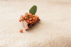 Pequeños totates anaranjados en la hoja seca fotografía de archivo