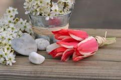 Pequeños tulipanes rojos Fotos de archivo libres de regalías