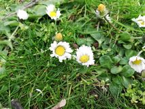 Pequeños wildflowers en la estación de primavera fotografía de archivo