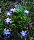 Peque?as flores hermosas en hierba verde imágenes de archivo libres de regalías